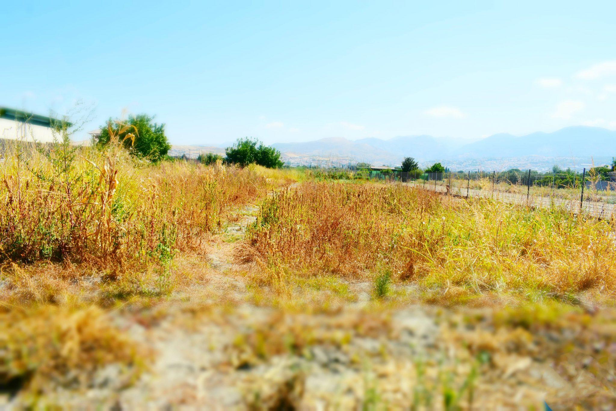 Finca rústica en Granada, Aravenal con acceso a la carretera